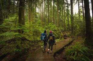 Couple in forest on wooden walkway, Lynn Canyon Park, North Vancouver, British Columbia, Canadaの写真素材 [FYI03804855]