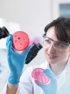 Scientist examining petri dish containing bacterial culture grown in laboratoryの写真素材 [FYI03804865]