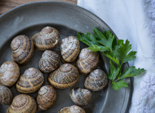 Overhead view of snail shells and herb on a plateの写真素材 [FYI03804947]