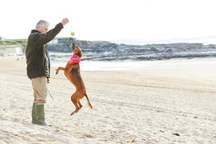 Man and dog on beach, Constantine Bay, Cornwall, UKの写真素材 [FYI03805149]