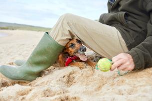 Man and pet dog sitting on beach, Constantine Bay, Cornwall, UKの写真素材 [FYI03805165]
