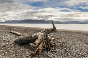 Driftwood on shingle beach, Homer Spit, Kachemak Bay, Alaska, USAの写真素材 [FYI03805195]
