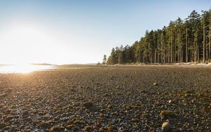 Beach and forest at sunrise, Rathrevor Beach Provincial Park, Vancouver Island, British Columbia, Caの写真素材 [FYI03805511]