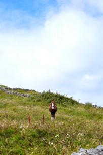 Portrait of horse in field, Inishmore, Irelandの写真素材 [FYI03805620]