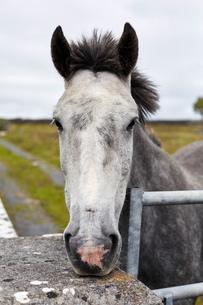 Portrait of horse, close-up, Inishmore, Irelandの写真素材 [FYI03805625]