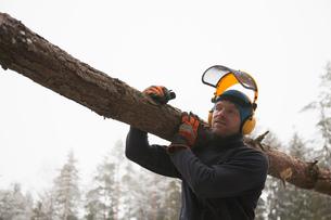 Logger carrying log, Tammela, Forssa, Finlandの写真素材 [FYI03805916]