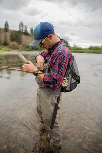 Man preparing bait in river, Clark Fork, Montana and Idaho, USの写真素材 [FYI03806447]