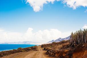 Dirt road, Corralejo, Fuerteventura, Canary Islandsの写真素材 [FYI03806997]