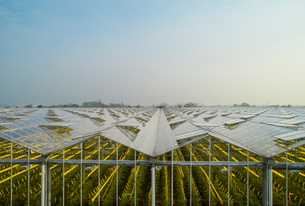 Greenhouse in the Westland area, part of Netherlands with large concentration of greenhouses, elevatの写真素材 [FYI03807607]