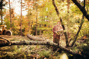 Male lumberjack cutting tree with chainsaw in forestの写真素材 [FYI03808858]