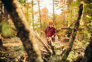 Male lumberjack cutting log with chainsaw in forestの写真素材 [FYI03808860]