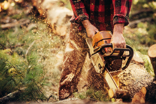 Midsection of lumberjack cutting log in forestの写真素材 [FYI03808865]