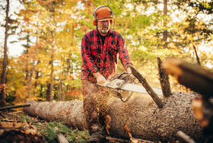 Lumberjack cutting log with chainsaw in forestの写真素材 [FYI03808868]
