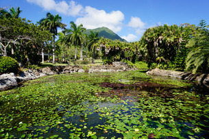 Nevis Botanical Garden, Nevis, St. Kitts and Nevis, Leeward Islands, Caribbeanの写真素材 [FYI03811082]