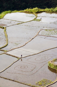 An elderly woman working in water filled rice terraces with fish traps, Tulgao Village near Tinglayaの写真素材 [FYI03811207]
