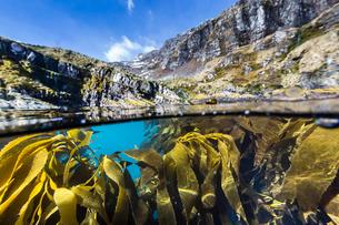 Above and below water view of kelp in Hercules Bay, South Georgiaの写真素材 [FYI03811486]