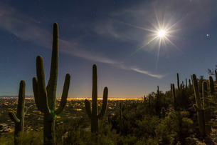 Giant saguaro cactus (Carnegiea gigantea), under full moon in the Catalina Mountainsの写真素材 [FYI03811502]