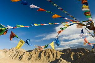 Prayer flags on the Peak of Victory, Leh, Ladakhn Himalayasの写真素材 [FYI03811665]