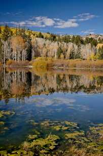 Yellow aspens reflected in Round Lake in the fall, Fishlake National Forestの写真素材 [FYI03811810]