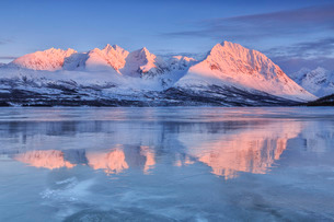 Snowy peaks are reflected in the frozen Lake Jaegervatnet at sunset, Stortind, Lyngen Alps, Troms, Lの写真素材 [FYI03811891]