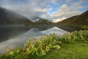 Mist and flowers frames The Fenetre Lakes Ferret Valley, Saint Rhemy, Grand St Bernard, Aosta Valleyの写真素材 [FYI03811903]