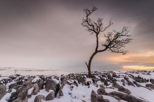 Twistleton Scar End in snow, Ingleton, Yorkshire Dales, Yorkshireの写真素材 [FYI03811967]