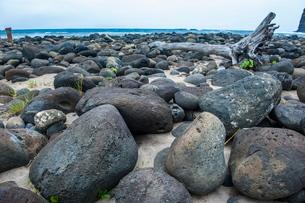 Huge pebbles on Halawa Beach in Halawa Bay on the island of Molokai, Hawaiiの写真素材 [FYI03812122]
