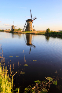 Typical windmills reflected in the canal framed by grass in spring, Kinderdijk, UNESCO World Heritagの写真素材 [FYI03812361]