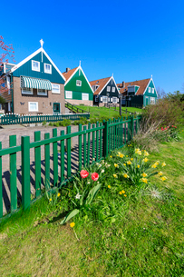 Typical wooden houses framed by meadows and flowers in the village of Marken, Waterland, North Hollaの写真素材 [FYI03812383]