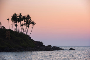 Palm trees silhouetted at Palolem Beach at sunset, Goa, India, Asiaの写真素材 [FYI03812444]