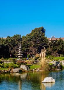 Japanese Garden, La Serena, Coquimbo Region, Chile, South Americaの写真素材 [FYI03812493]