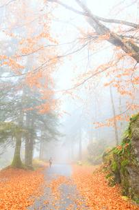 One person walk in the forest of Bagni di Masino, Valmasino, Valtellina, Lombardy, Italy, Europeの写真素材 [FYI03812726]