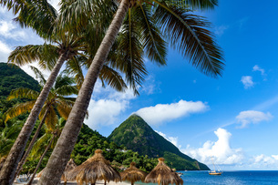 Gros Piton, with palm trees and thatched sun umbrellas, Sugar Beach, St. Lucia, Windward Islands, Weの写真素材 [FYI03812743]