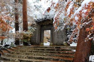First fall of snow onto autumn coloured maple leaves, at entrance to Kubota Itchiku Kimono Museum, Fの写真素材 [FYI03812769]