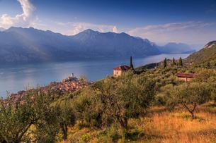 Elevated view of Castello Scaligero (Scaliger Castle), Malcesine, Lake Garda, Veneto, Italian Lakes,の写真素材 [FYI03812790]