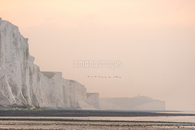 View from Cuckmere Haven of geese flying over the Seven Sisters chalk cliffs, South Downs National Pの写真素材 [FYI03812843]
