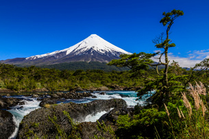 Petrohue rapids, snow-capped, conical Osorno volcano, Vicente Perez Rosales National Park, Spring, Lの写真素材 [FYI03812934]