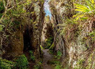 Rock Labyrinth, Asilo de la Paz, Highlands of Floreana (Charles) Island, Galapagos, UNESCO World Herの写真素材 [FYI03813140]