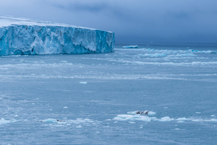 Very huge glacier on McClintok (MacKlintok) Island, Franz Josef Land archipelago, Arkhangelsk Oblastの写真素材 [FYI03813148]