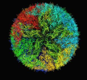 Zika virus virion capsid molecular modelの写真素材 [FYI03813199]