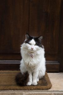 玄関口で休むパリの猫の写真素材 [FYI03813481]