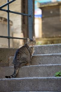 パリの階段で振り返るキジトラの猫の写真素材 [FYI03813498]