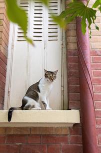 窓枠に座るパリの猫の写真素材 [FYI03813503]