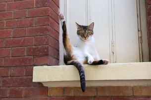 窓枠で足を上げるパリの猫の写真素材 [FYI03813505]