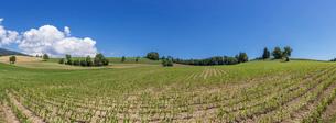 スイス、ジュネーブ郊外の風景の写真素材 [FYI03813793]
