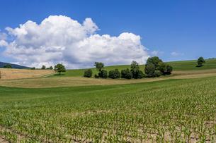 スイス、ジュネーブ郊外の風景の写真素材 [FYI03813802]