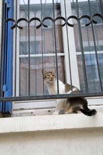 窓枠に座ったパリのネコの写真素材 [FYI03813836]