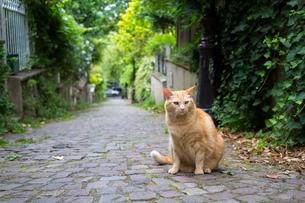 パリの小路で暮らすチャトラの写真素材 [FYI03813838]