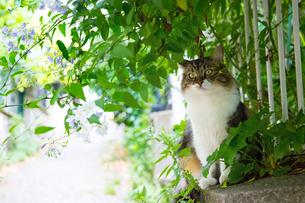 パリの路地で緑に囲まれた猫の写真素材 [FYI03813842]