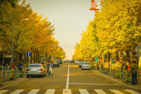 横浜・日本大通りの紅葉の写真素材 [FYI03813953]